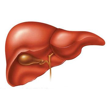 هپاتیت، اپیدمیولوژی و روشهای تشخیص آزمایشگاهی